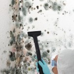 Black-Mold-Remediation-West Palm Beach