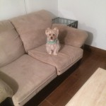 West Palm Beach-Sofa-Pet-Stain-Cleaning