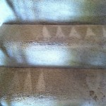 West Palm Beach-Stairs-Carpet-Cleaning