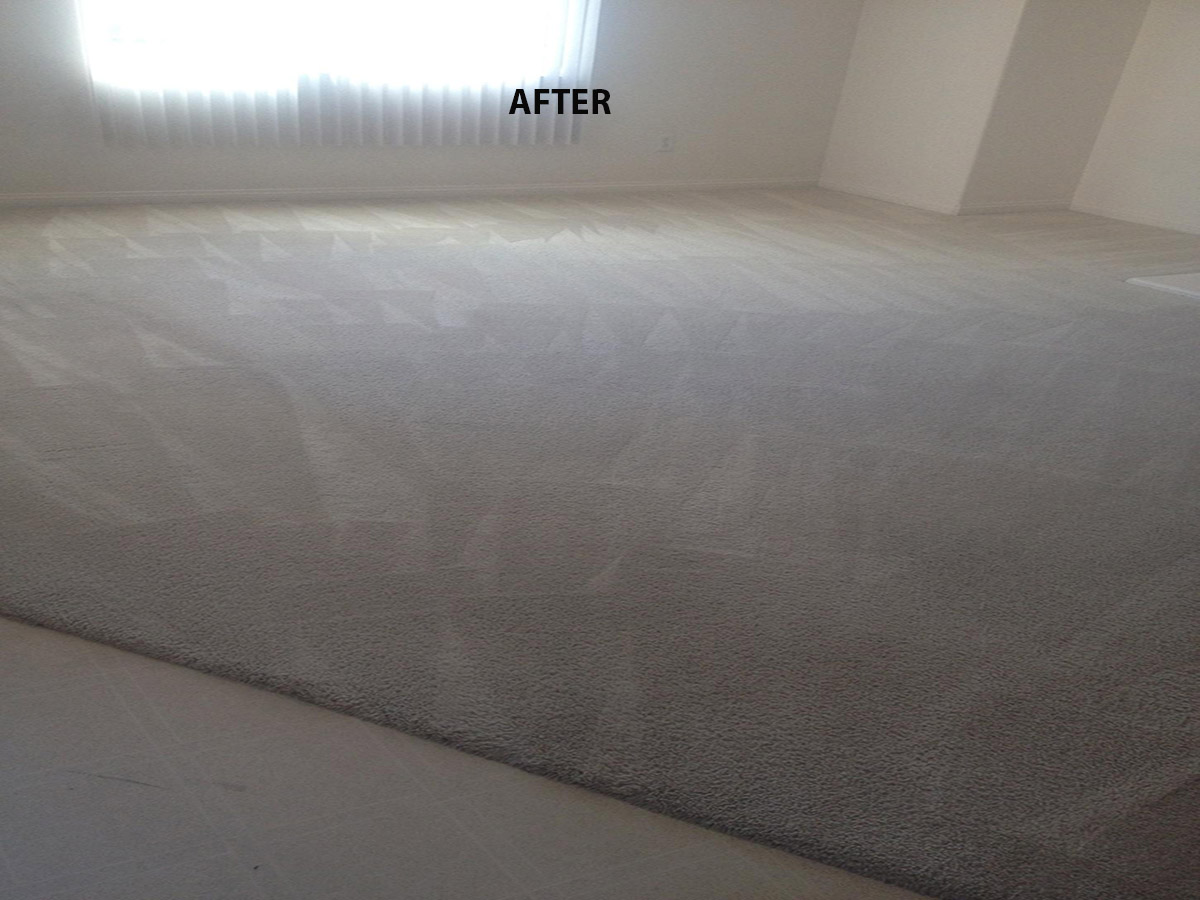 Pet stains and odors removal 561 257 6999 - Remove carpet stains ...